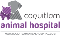 Coquitlam Animal Hospital
