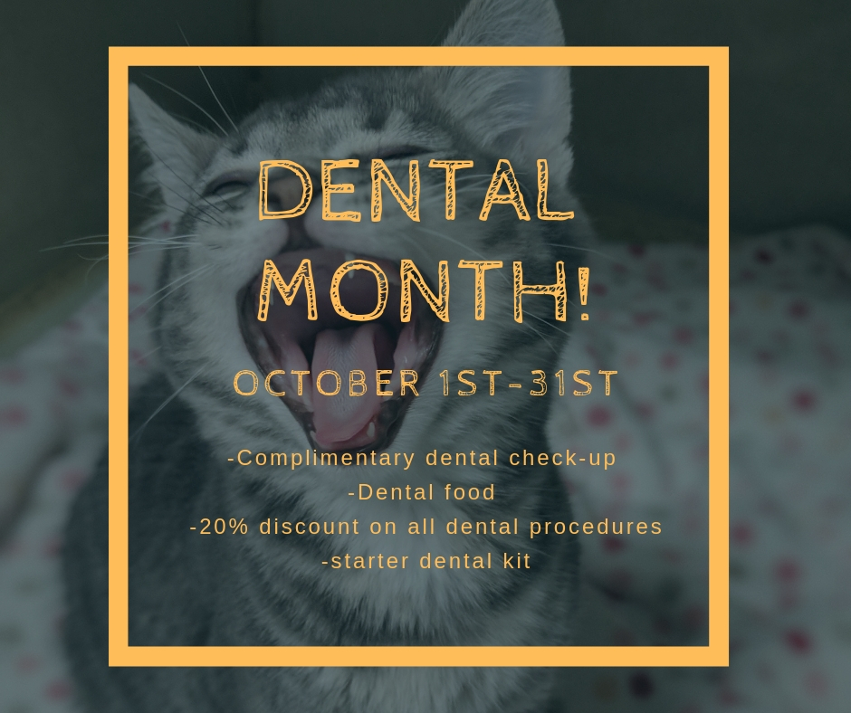 OCTOBER IS DENTAL MONTH!