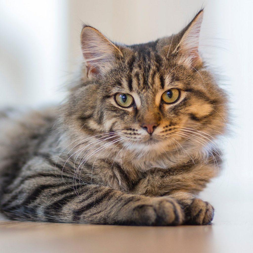 coquitlam-animal-hospital-preventative-care-dogs-cats